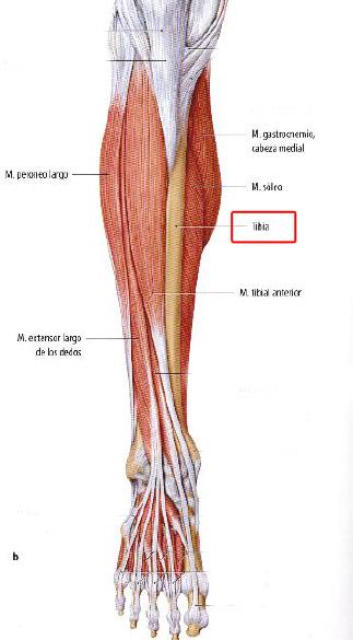 Ivan Moreno periostitis tibial vista anterior extremidad inferior